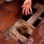 Commercial Termites Services in Huntsville, Alabama