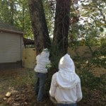 Bee Swarm Capture, and Bee Hive Removal