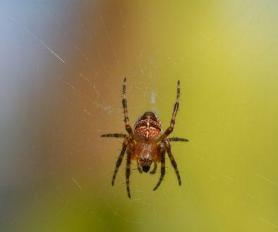 spider-6605528_1920